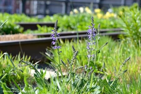 Sunshine on the High Line