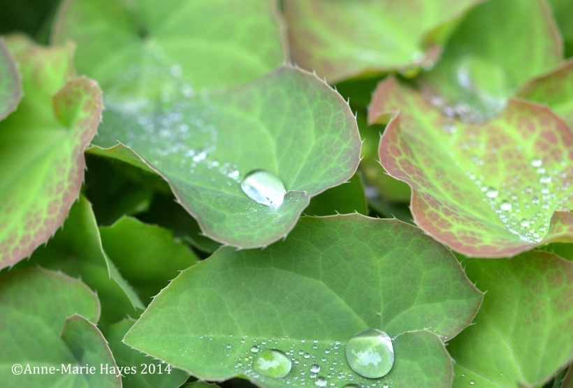 The water droplets remind me of pearls, especially with the reflection of the water.