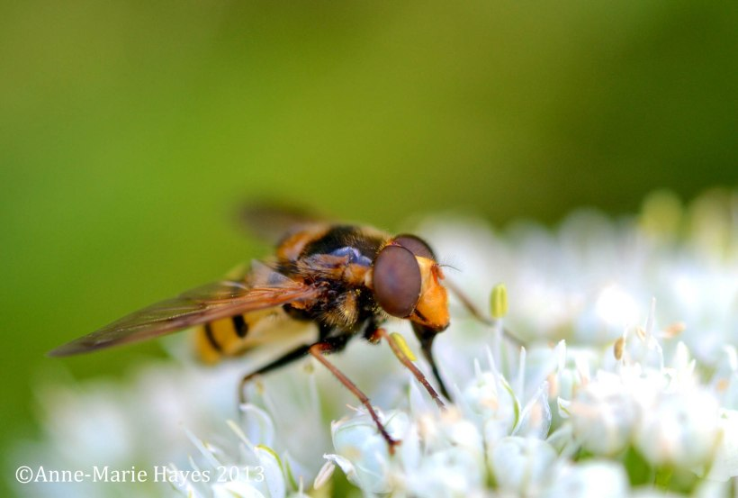 One of the first macro shots I took, at Blakesley Hall.