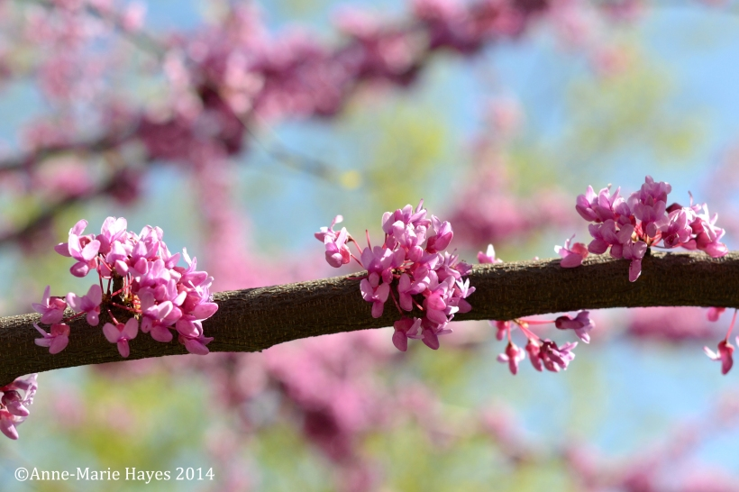 The blossom is literally coming to life and provides a warmth richness of colour across the park.